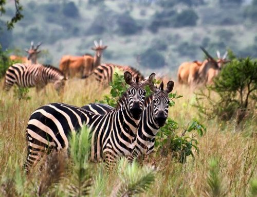 9 Days Rwanda Tour Rwanda Wildlife tour