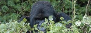 4 Days Uganda tour Gorilla Trekking Wildlife safari