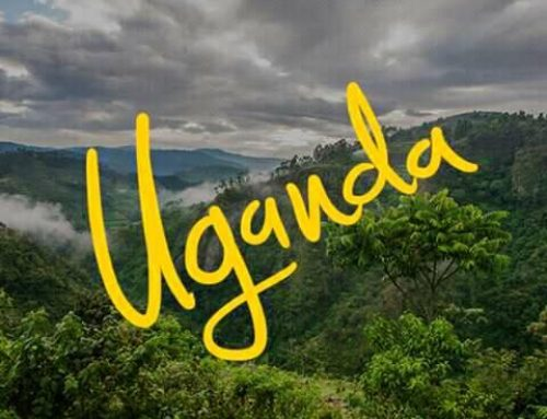 A Tourist's Guide To The Pearl Of Africa; Uganda Safari News