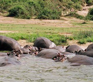 3 Days Queen Elizabeth Park Safari Uganda tour