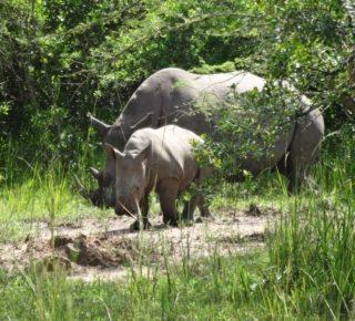 3 Days Uganda Safari to Murchison Falls National Park, 3 days Murchison Falls Safari Uganda