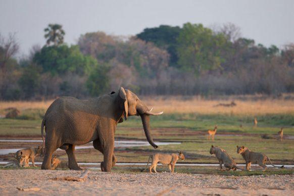 3 Days Zambia Safari to South Luangwa