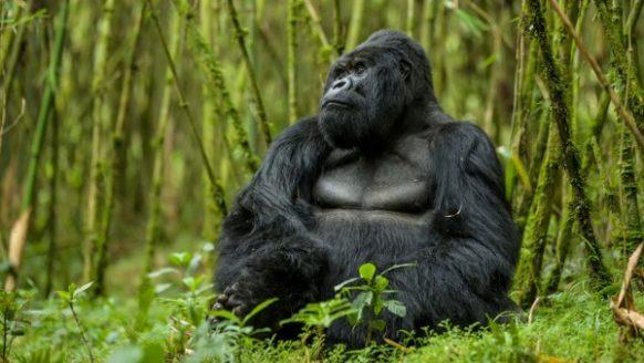 5 Days Rwanda Gorilla Safari Tour