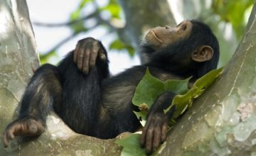 5 Days Wildlife & Chimpanzee Safari in Rwanda to Akagera and Nyungwe Forest National Park