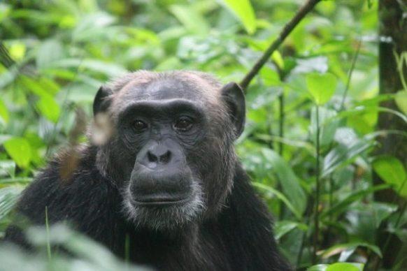 6 Days Uganda Rwanda Safari