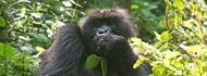 5days-gorilla-safaris