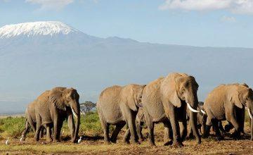6 Days Kenya Tanzania Combined Safari Maasai Mara, Serengeti & Ngorongoro
