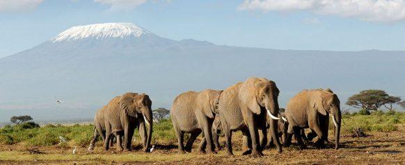 4 Days Kenya Safari Masai Mara & Lake Nakuru - Wildlife Viewing Safari in Kenya to Maasai Mara National Reserve & Lake Nakuru National Park