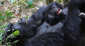 10 days in rwanda safari