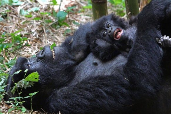 https://www.primeugandasafaris.com/rwanda-safaris/rwanda-gorilla-safari-4-days.html/