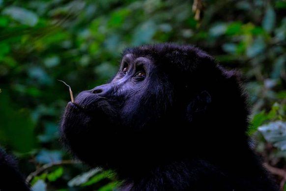 https://www.primeugandasafaris.com/rwanda-safaris/rwanda-gorilla-trekking.html
