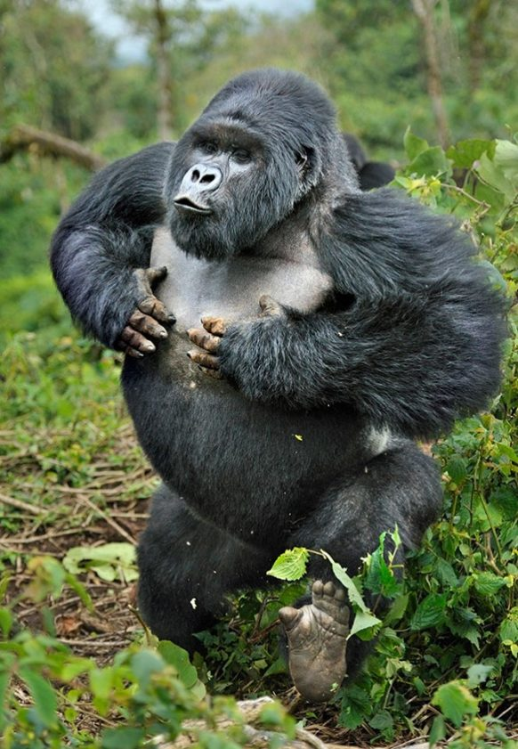 5 Days Uganda Primates Safari, Gorilla Trekking & Chimpanzee Tracking Tour