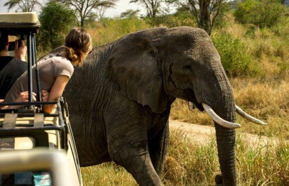 8 Days Uganda Safari, Gorilla Trekking Chimpanzee Tracking, Uganda Wildlife Game Viewing Safari