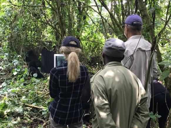 https://www.primeugandasafaris.com/congo-safari-tours/3-days-mountain-gorilla-trekking-safari-congo.html