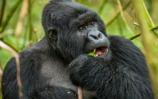 8 Days Active Adventure Vacation Safari in Rwanda
