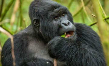 8-Days-Active-Adventure-Vacation-Safari-in-Rwanda_800x600-360x220