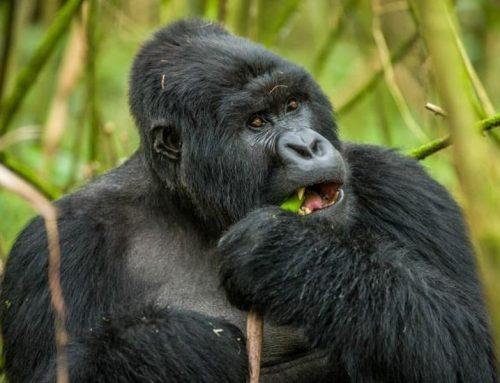 6 Days Rwanda safari Rwanda Wildlife Tour
