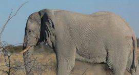 8 Days Classic Namibia Safari; Namib – Swakopmund – Brandberg – Etosha National Park
