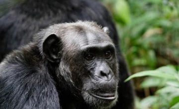 8 Days Gorilla safari in Rwanda