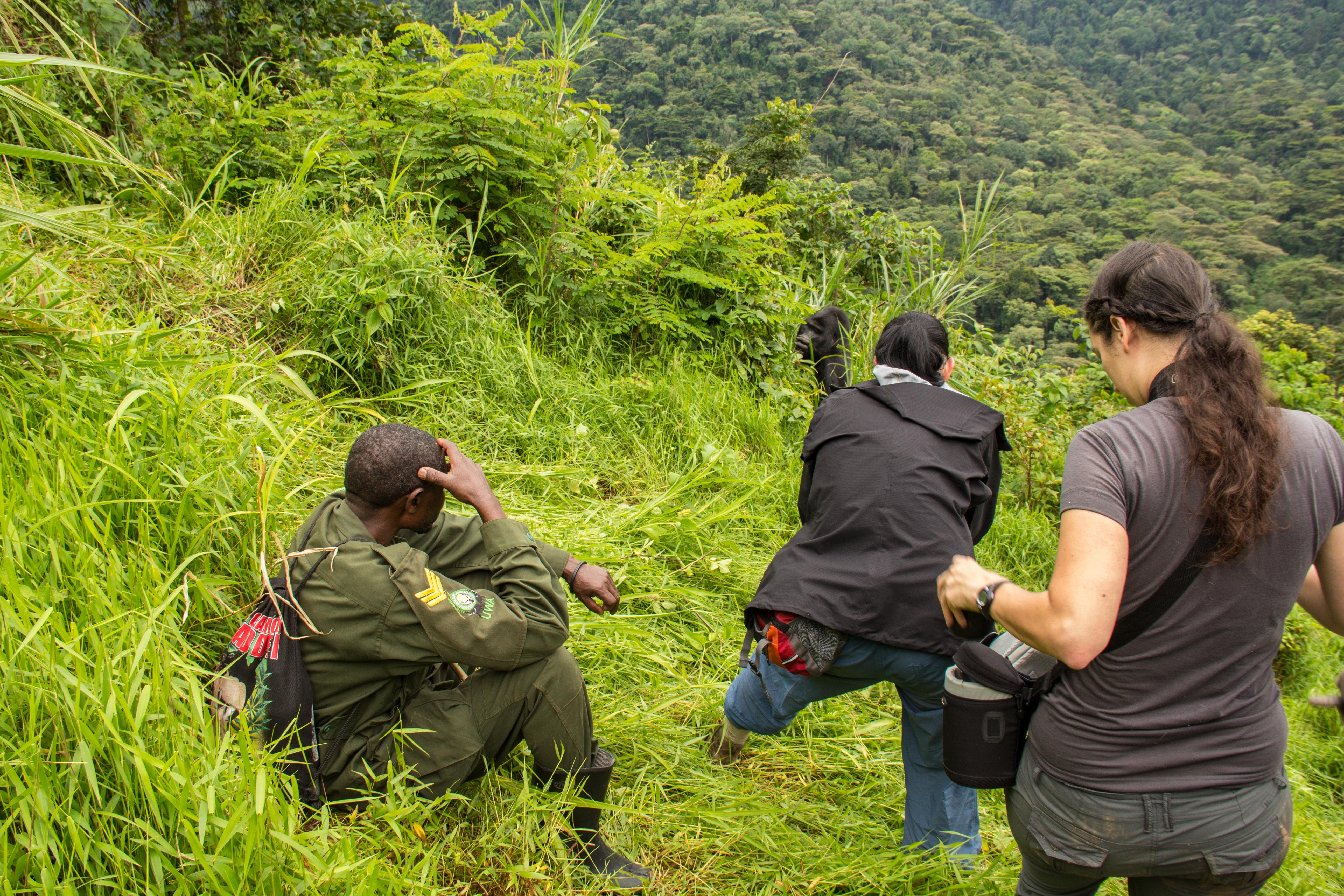 3 days Uganda gorilla trekking safari Bwindi Impenetrable National Park