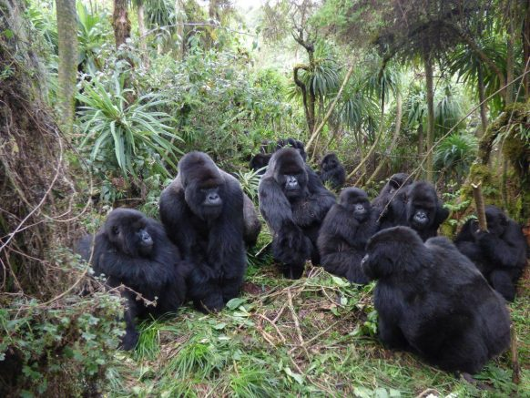 https://www.primeugandasafaris.com/short-uganda-safaris/4-days-gorilla-tour-in-uganda-with-double-tracking-in-uganda.html/
