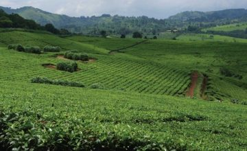 9 Days Agricultural tour in Uganda