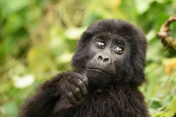 9 Days Rwanda Gorilla Safari tour