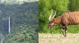 Aberdares-national-park-East Africa Safaris
