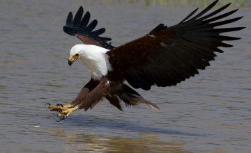 Uganda Birding Safari, 14 Days uganda tour