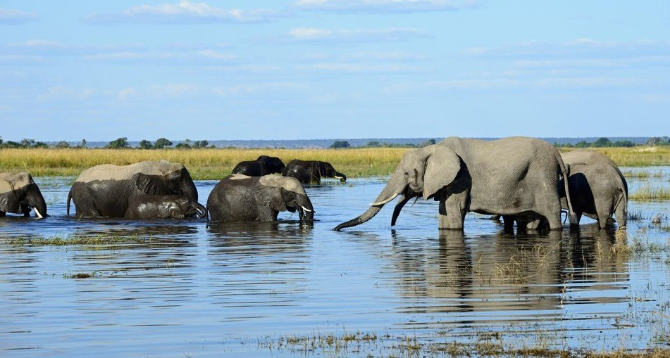Chobe National Park-Botswana's finest safari hub