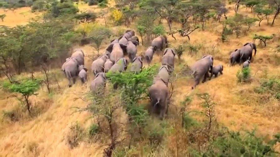 akagera-national-park-rwanda-safari-tours