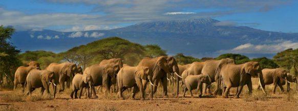 Amboseli-National-Park safari kenya wildlife