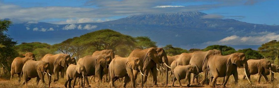 Amboseli-National-Park-kenya safari tours