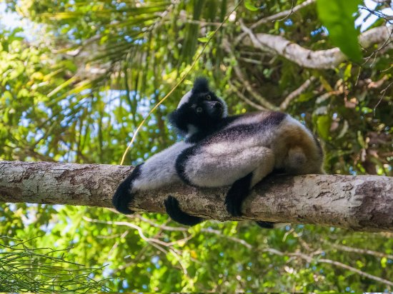 Analamazaotra national park madagascar tours safari package