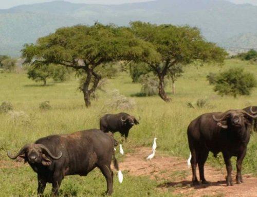 Kigezi Wildlife Reserve Uganda