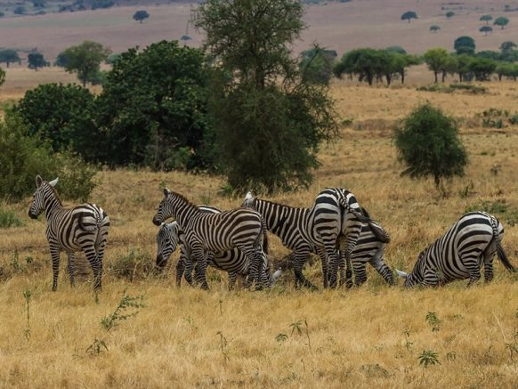 Animals with in the Kigezi wildlife reserve