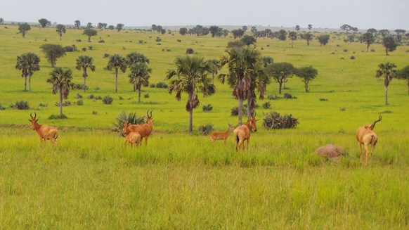 Aswa Lolim Game Reserve