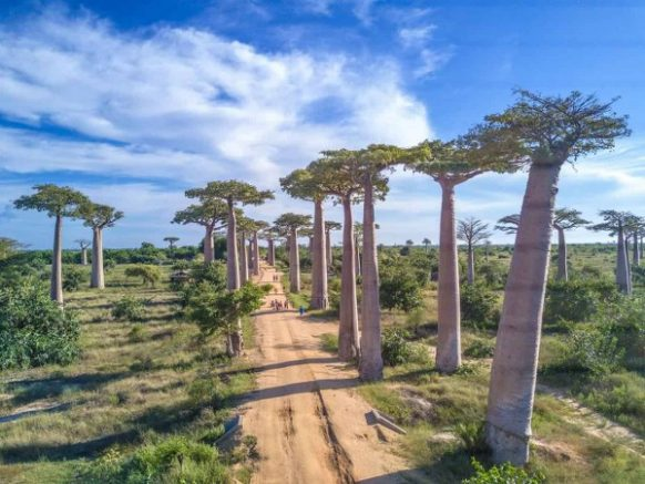 Baobab Avenue Madagascar safari tours package