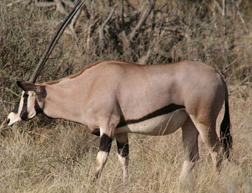 Buffalo Springs National Game Reserve