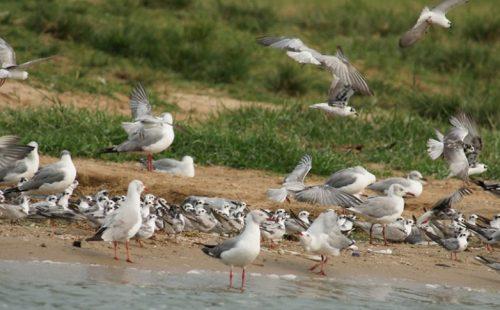 Bird watching in Katonga Wildlife Reserve