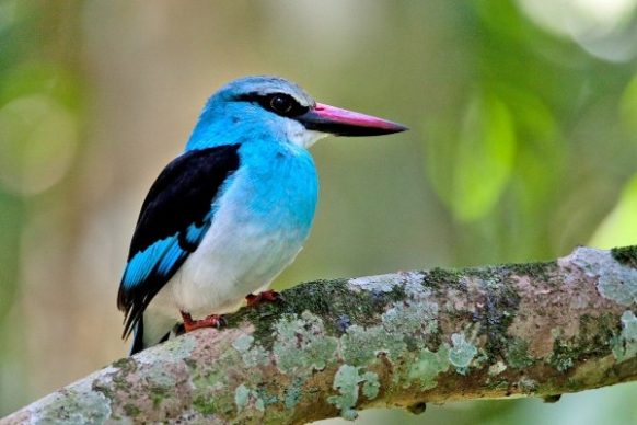 Bird watching in Kibale Forest National Park Uganda