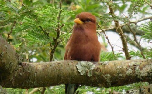 Birdlife in the Kyambura wildlife Reserve