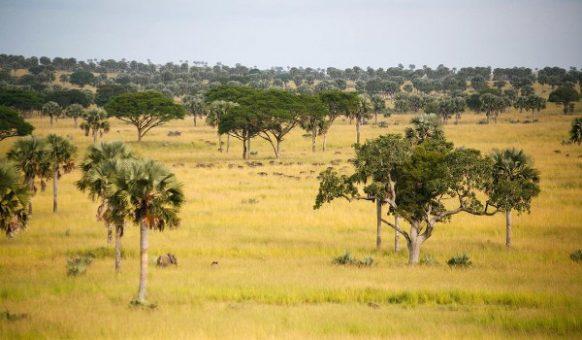 Bugungu wildlife reserve Community walks