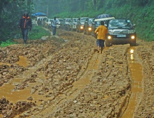 Government to Construct an All Weather Road to Bwindi Impenetrable National Park