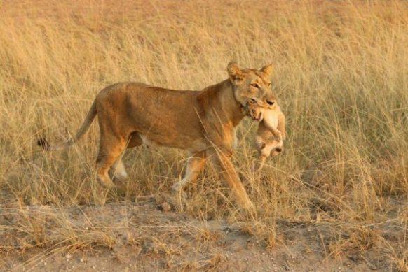 2 Days Uganda Camping Safari Queen Elizabeth Uganda Tour 4 Days