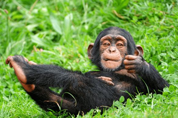 2 days Chimpanzee Trekking Safari in Uganda to Budongo Forest uganda tour