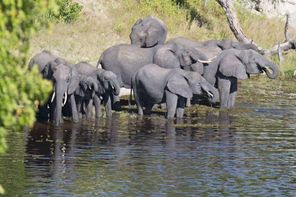 Chobe River Front botswana safari