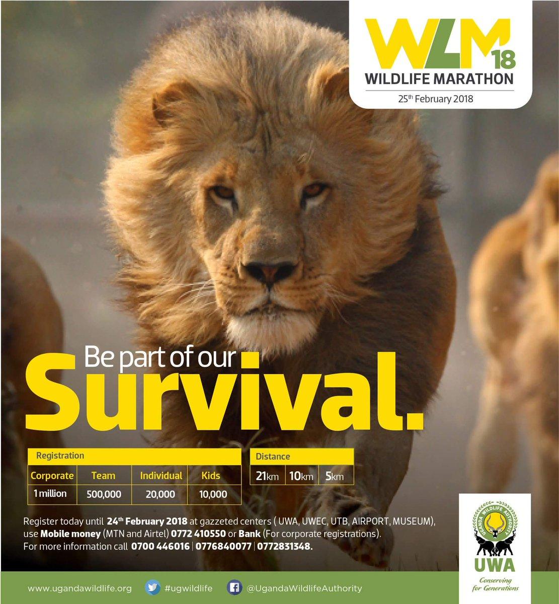wildlife marathon