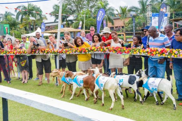 Royal Ascot Goat Races