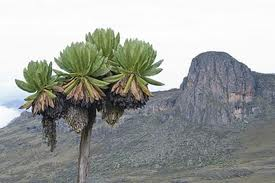 Mt. Elgon national park
